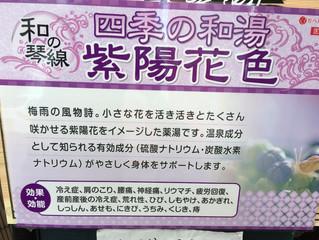 6/12まで梅雨の風物詩、紫陽花色です!