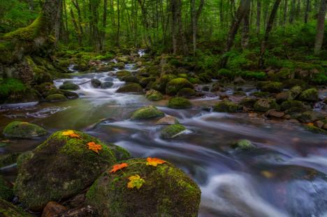 Parc national de la Jacques-Cartier / Jacques-Cartier National Park, Canada