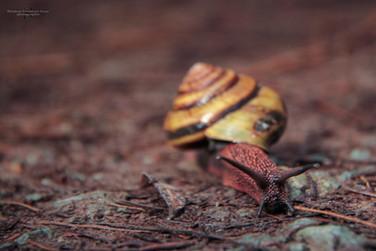 Escargot / Snail