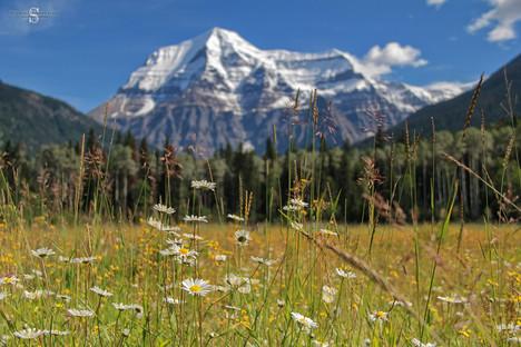 Mont Robson, Jasper National Park, Canada