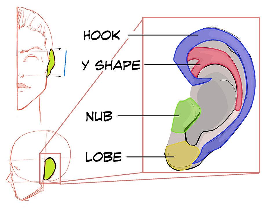 How to Draw Ears 02.jpg