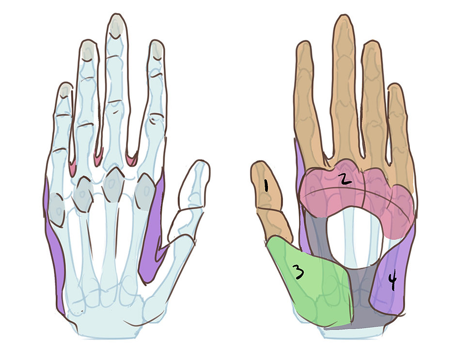 How to Draw Hands 02.jpg