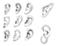 How to Draw Ears 04.jpg