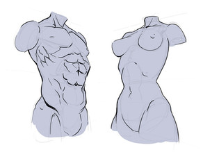 How To Draw The Torso: Front View