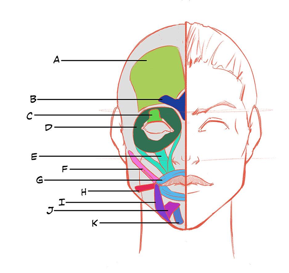 Facial Expressions 01.jpg