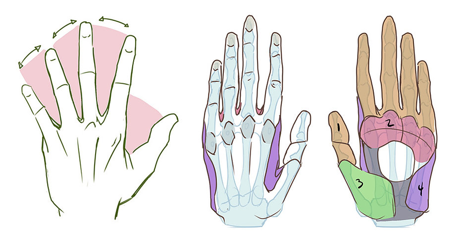 How to Draw Hands.jpg