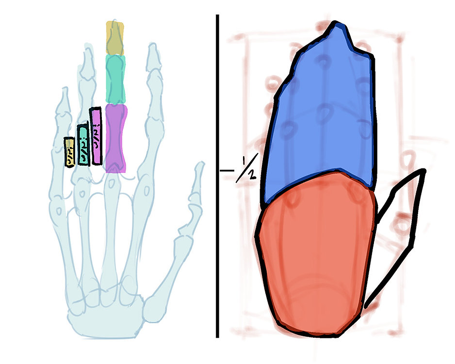 How to Draw Hands 01.jpg