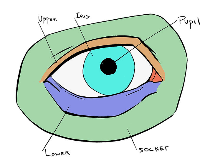 How To Draw Eyes 1.jpg