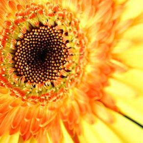 向大自然學習 - 與葵花籽的對話