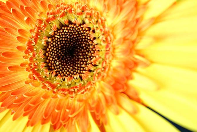 Amarelo: a cor da vida