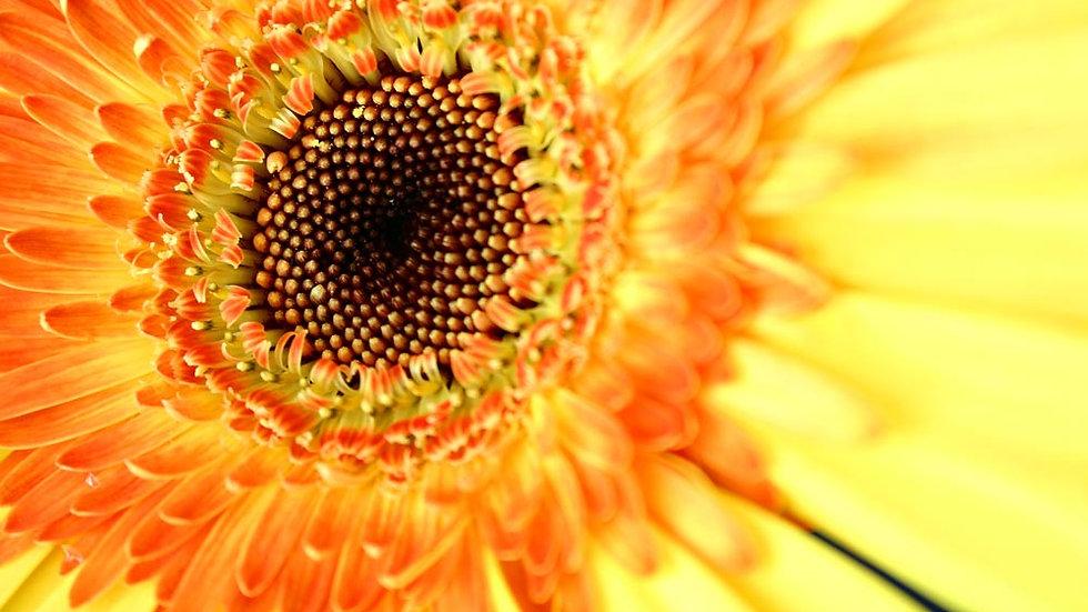 Sunflower Cleanser for Sensitive Skin