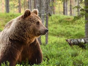 The Bear & the Trash Can