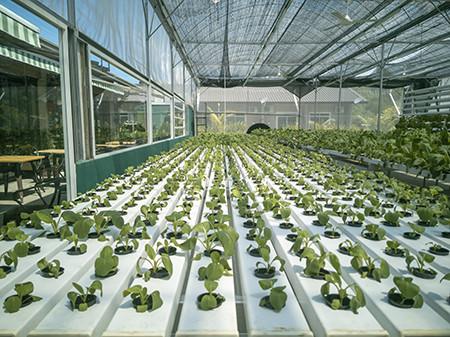 One of the Best Additives for Aquaponics & Aquaculture