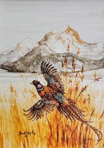 Pheasant & Mountain