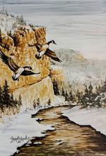 Teton Geese