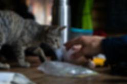 Katze Refugio Los Troncos