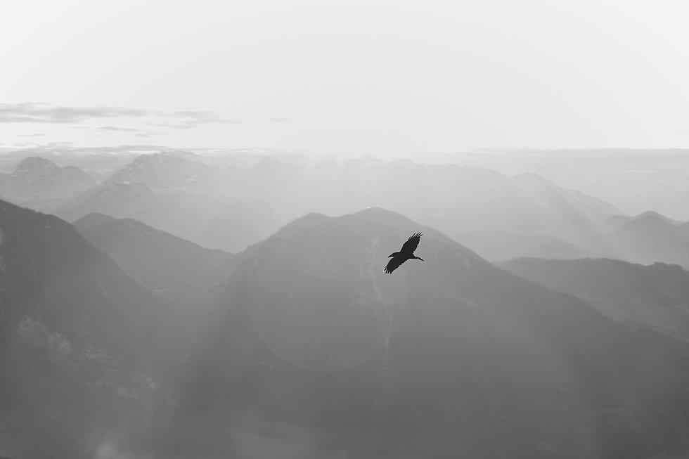 Vogel in den Bergen