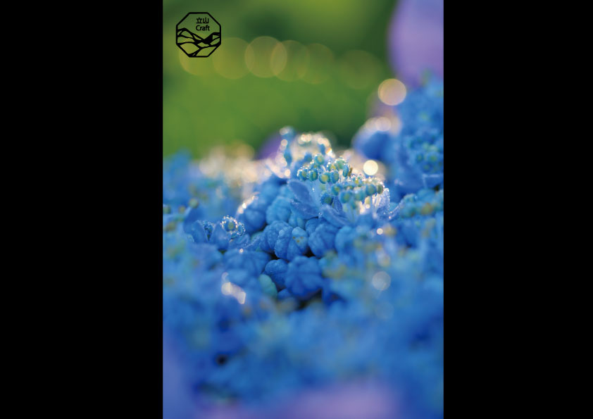 立山の四季 6月紫陽花.jpg