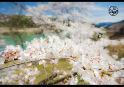 立山の四季 春 白岩ダム.jpg
