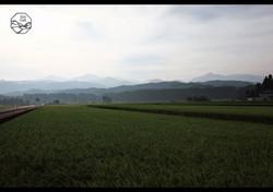 立山の四季 夏 稲と山並み.jpg