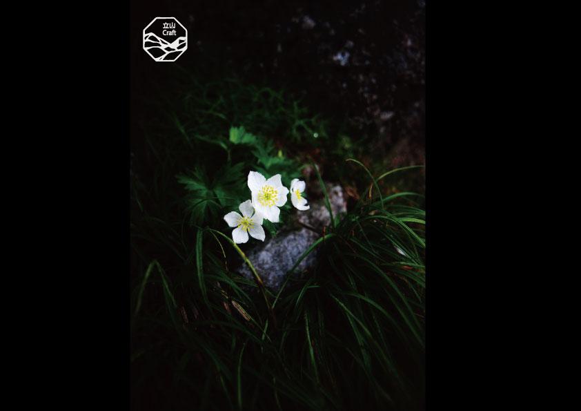 立山の四季 高山植物.jpg