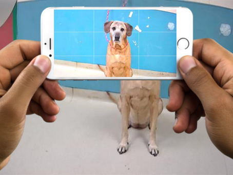 Phone-Friendly Pet Photo Tips