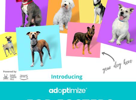 Adoptimize is taking pet photos to the next level.