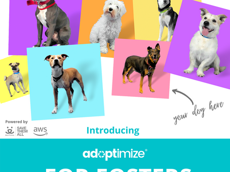 Adoptimize is taking pet photos to the next level.