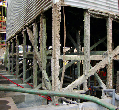 BEFORE - Wood Structure Replacements