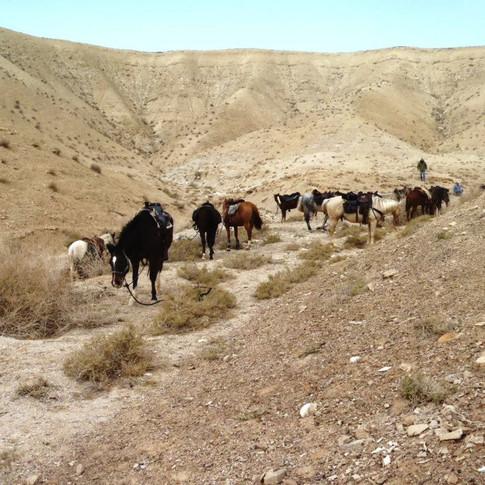 Stark and Stunning Judean Desert