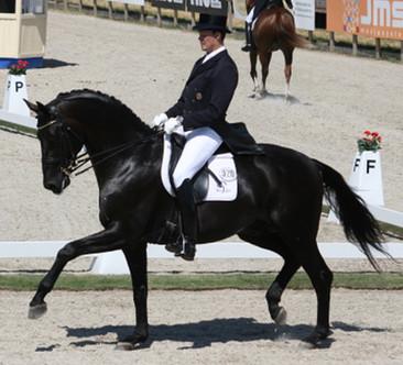 Spring Hill Dressage - Sune Hansen and Emily Ward-Hansen