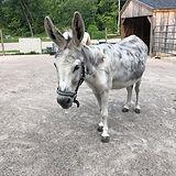 Overview Donkeys.jpg