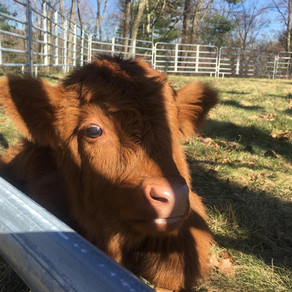 """A ROAD TRIP TO UNITY FARM SANCTUARY"" (CAUGHT IN SOUTHIE)"