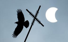 Vogel vor Sonnenfinsternis
