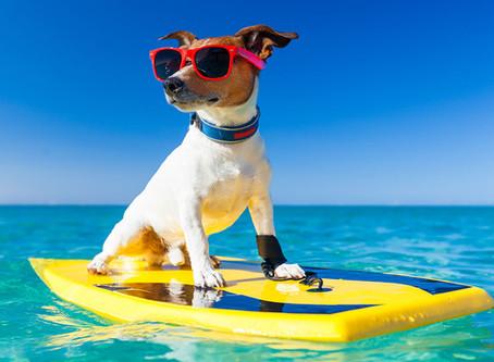 Samen met uw Hond op vakantie,