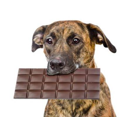 Honden en Chocolade