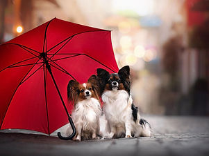 Dogs in the rain.jpg