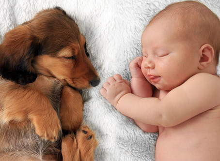 Hond en Kind Samen
