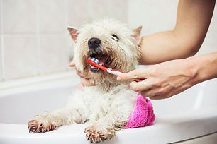 Tanden poetsen.jpg