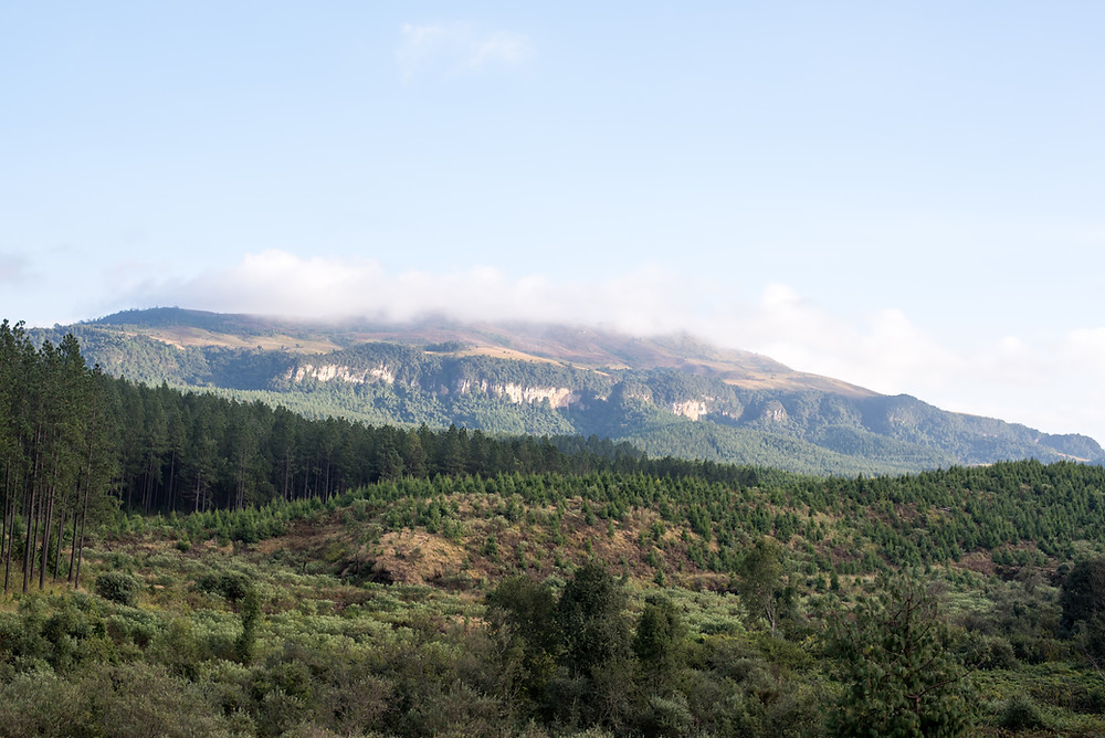 Forest scenery in South Africa