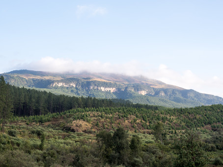 Reforming forestry entrepreneurship education in South Africa
