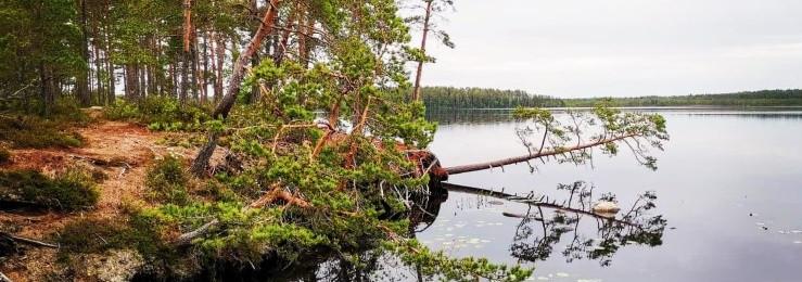 Finnish lake scenery