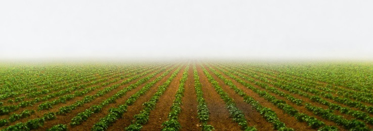 crop field disappearing into horizon