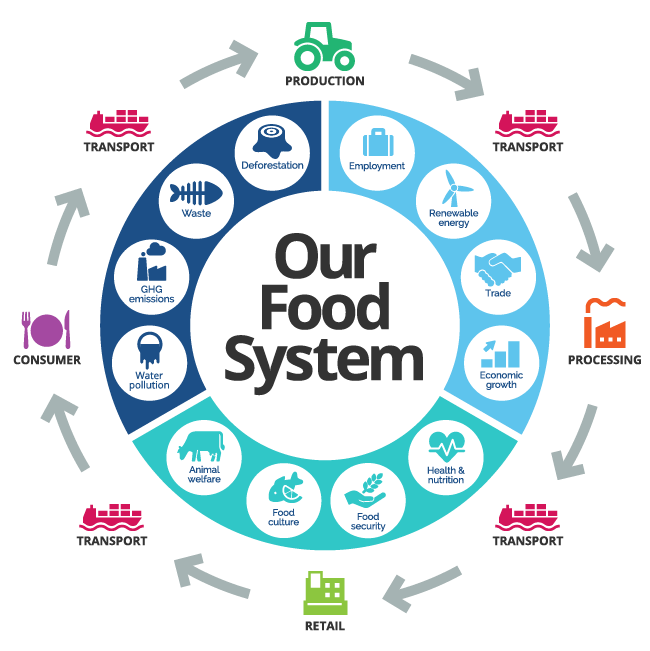 circular graph of the food system