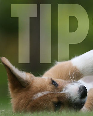 tips.jpg
