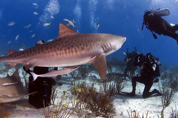 Shark paparazzi