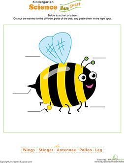 bee-science-plants-animalskindergarten-t