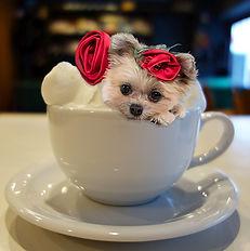 Delilah-mycupofcoffee.jpg