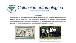 coleccion_entomológica