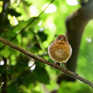 'Angry birds take two' by Karen Greene